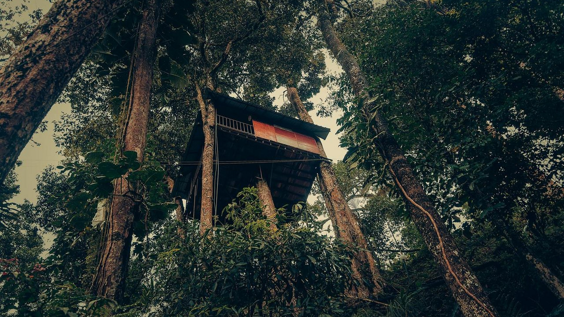 tree-house-at-ela-ecoland-munnar