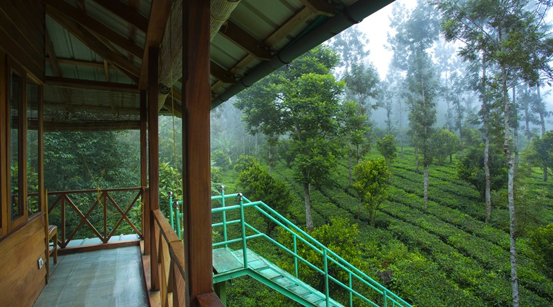 munnar-treehouse-package