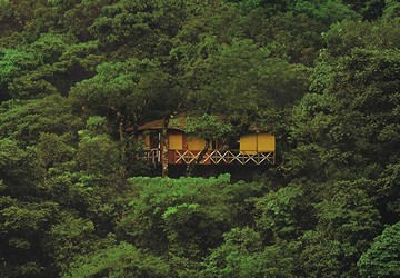 Kerala Treehouse Holidays In Kerala Tree House Resorts
