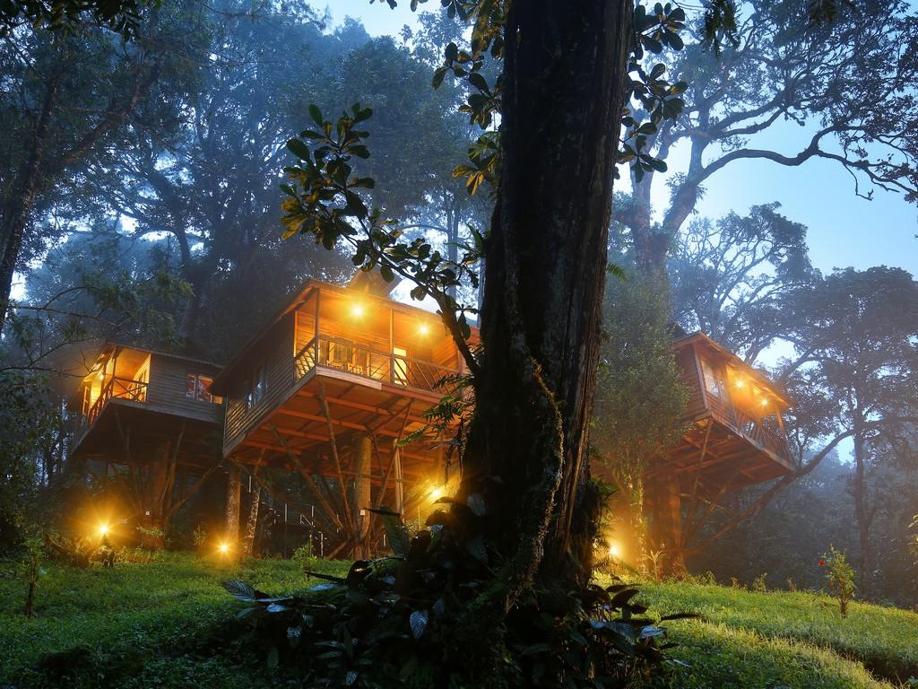 Nature Zone Jungle Resort Munnar | Wayanad Kerala Tree House Resort