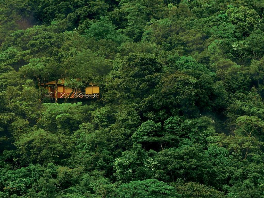 Wayanad Kerala Tree House Resort