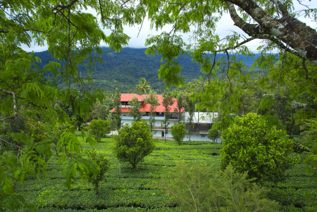 Treehouse Booking in kerala