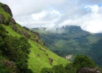 Top Best 5 Wayanad Kerala Tree House Resort 2