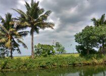 Best Treehouse Booking in Kerala 1